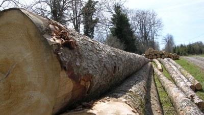 Produits de la forêt - Photo Claude Schneider - Copyrigth