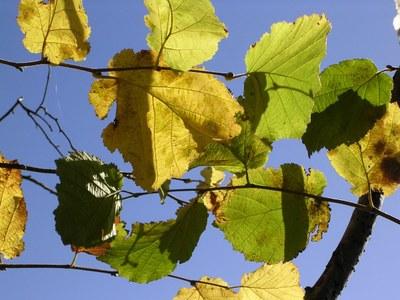 En automne - Photo Claude Schneider - Copyrigth