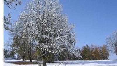 En début de neige Aux Alleines  - Photo Claude Schneider - Copyrigth