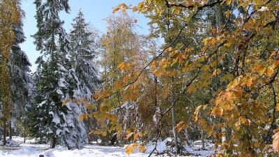 Neige en automne - Photo Claude Schneider - Copyrigth