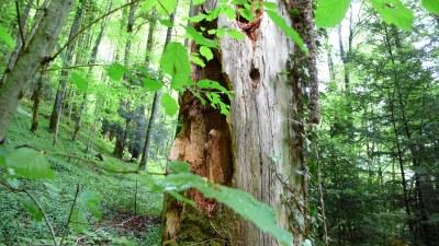 En forêt - Photo Claude Schneider - Copyrigth
