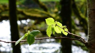Au printemps - Photo Claude Schneider - Copyrigth