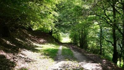 Sentier en sous bois - Photo Claude Schneider - Copyrigth