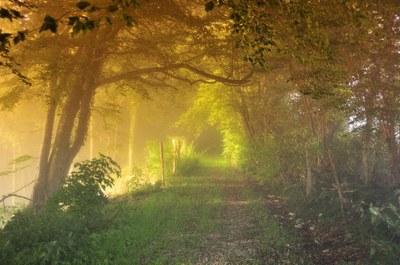 1 Promenade en sous bois - Photo JF Varriot - Copyrigth