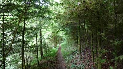 Promenades en sous bois 9 - Photo Claude Schneider - Copyright