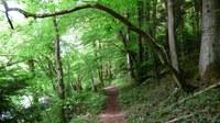Promenades en sous bois 10 - Photo Claude Schneider - Copyright