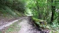 Promenades en sous bois 12 - Photo Claude Schneider - Copyright
