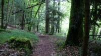 Promenades en sous bois 13 - Photo Claude Schneider - Copyright