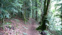 Promenades en sous bois 14 - Photo Claude Schneider - Copyright