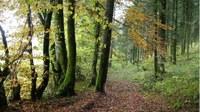 Promenades en sous bois 4 - Photo Claude Schneider - Copyright