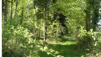 Promenades en sous bois 7 - Photo Claude Schneider - Copyright