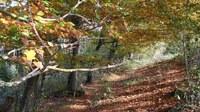 Promenades en sous bois 1 - Photo Claude Schneider - Copyright